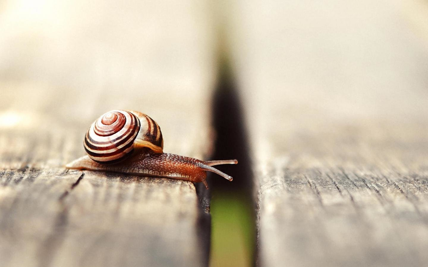 Free download Snail wallpaper ID:198939 hd 1440x900 for computer
