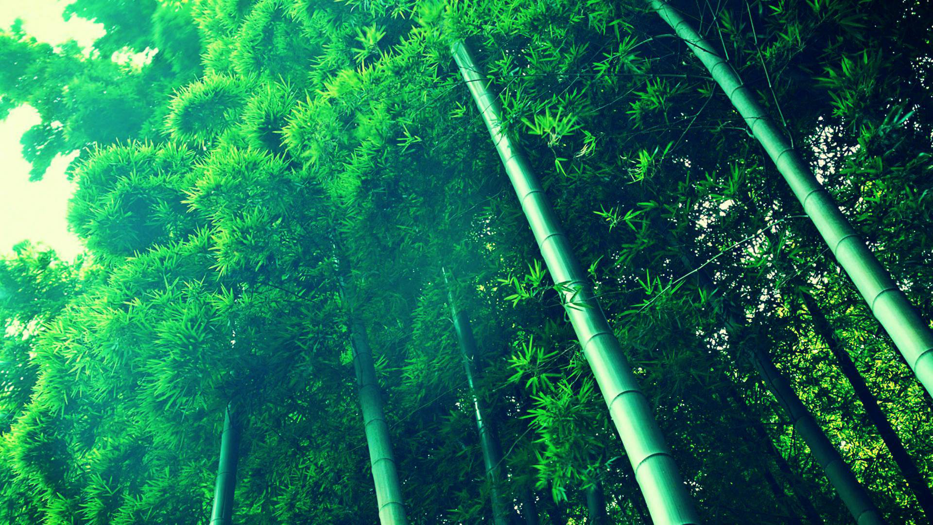 Best Bamboo background ID:246849 for High Resolution full hd 1920x1080 PC
