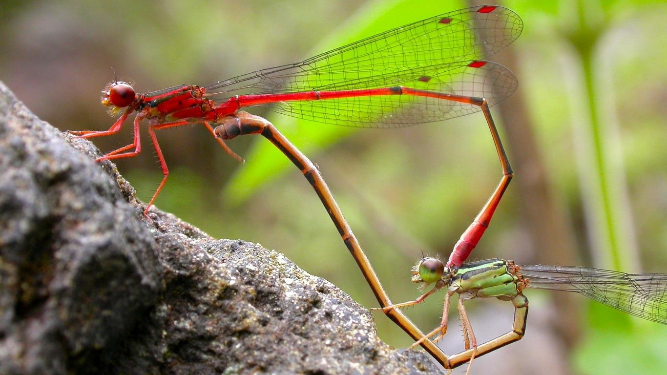 Download laptop Dragonfly computer wallpaper ID:467573 for free