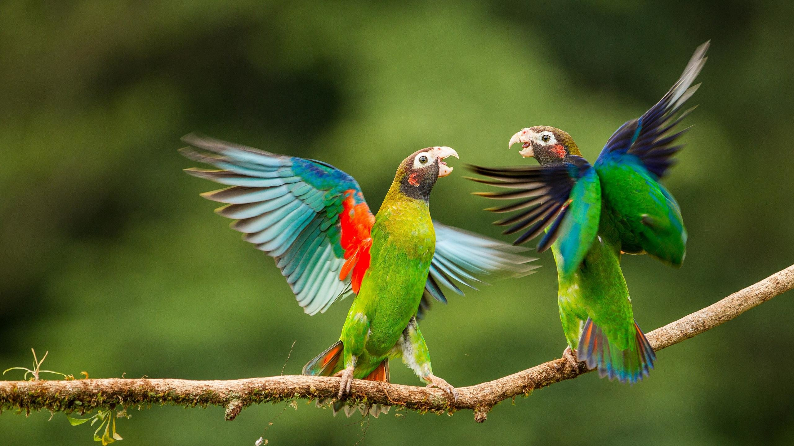 Awesome Parrot free background ID:25756 for hd 2560x1440 PC