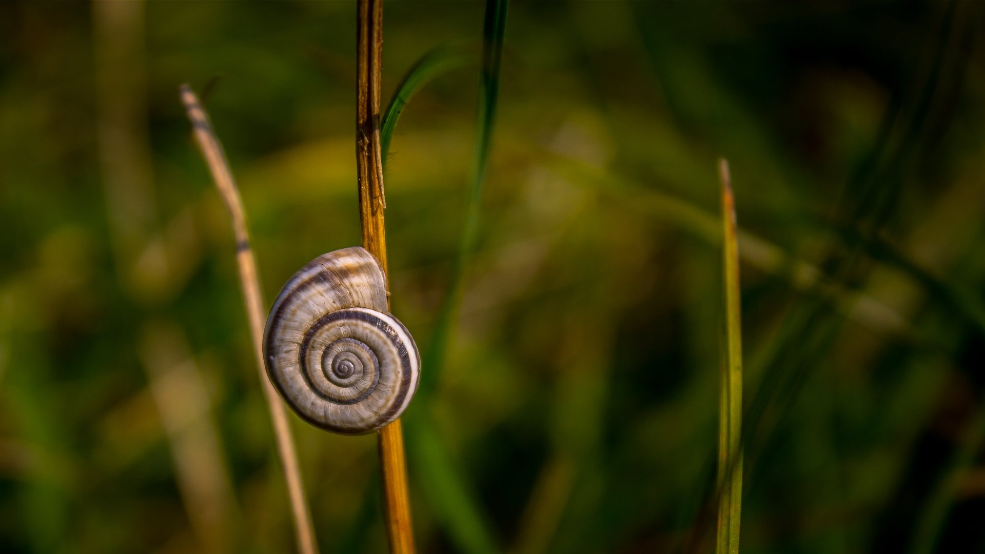 Awesome Snail free background ID:198873 for 1080p PC