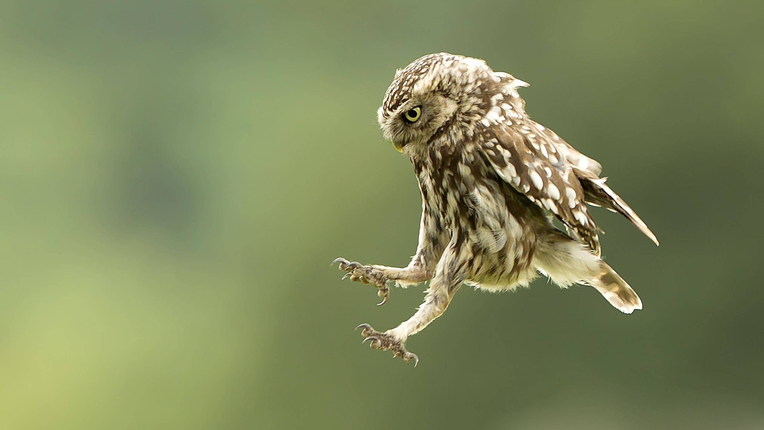 Free Owl high quality wallpaper ID:237224 for hd 2560x1440 computer