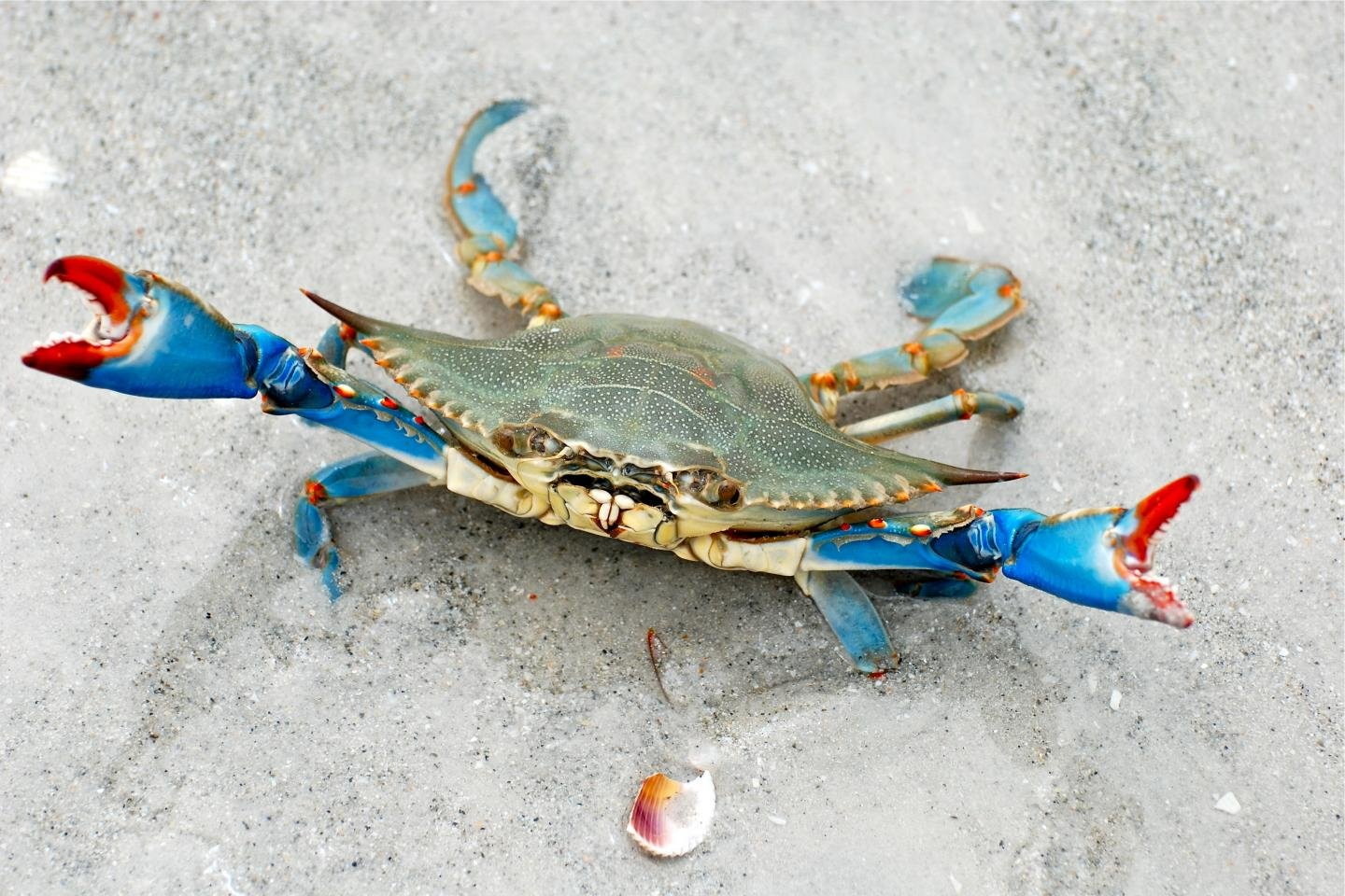 Best Crab background ID:294323 for High Resolution hd 1440x960 computer