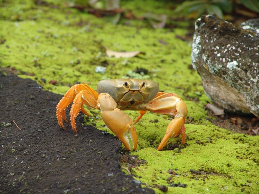 Best Crab wallpaper ID:294322 for High Resolution hd 1024x768 computer