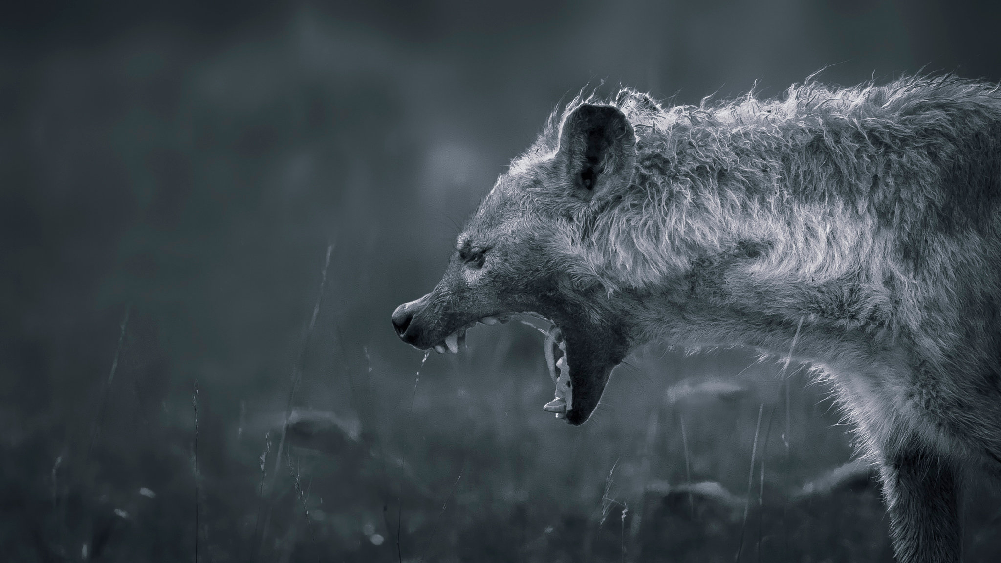 Awesome Hyena free background ID:239236 for hd 2048x1152 PC