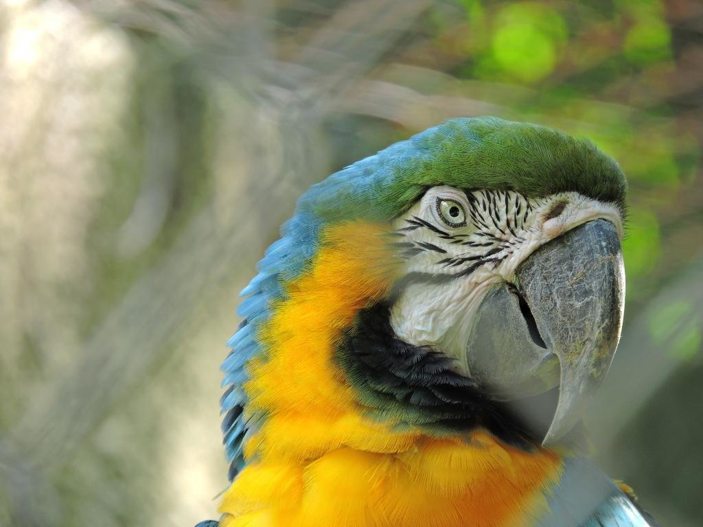 Free download Macaw wallpaper ID:46519 hd 1024x768 for PC