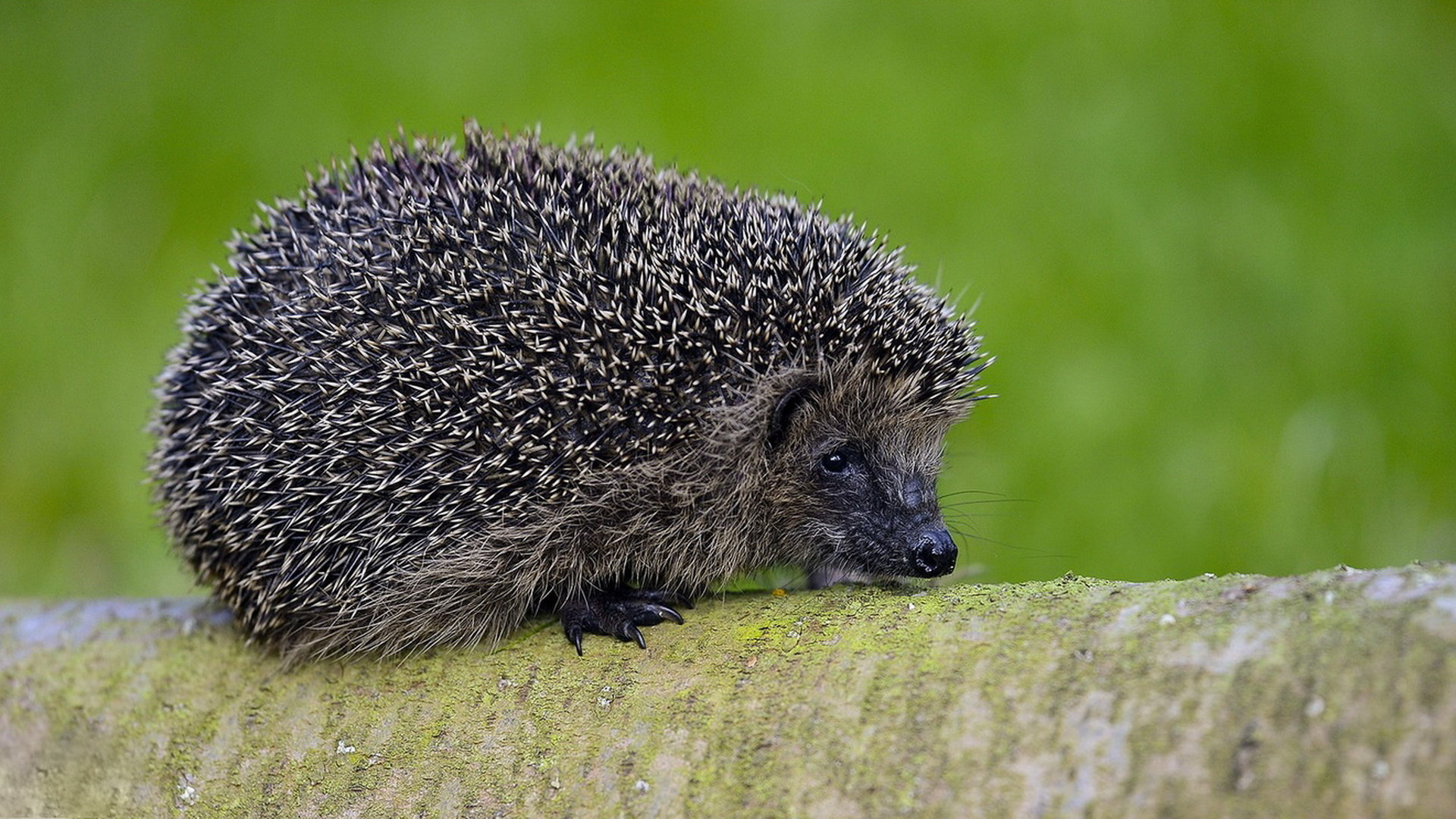 Awesome Hedgehog free wallpaper ID:241851 for full hd 1080p PC