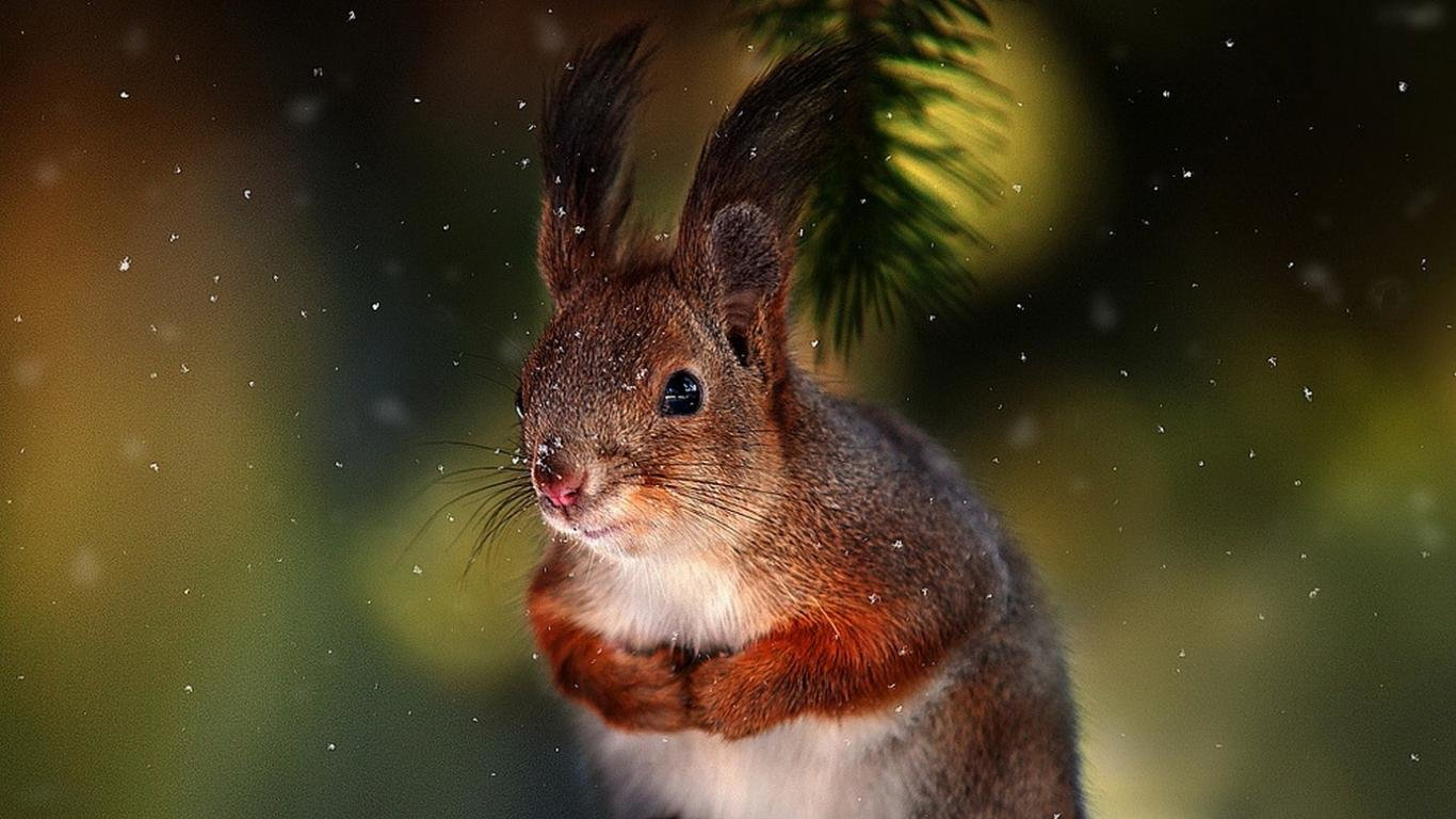 Best Squirrel wallpaper ID:311664 for High Resolution laptop computer