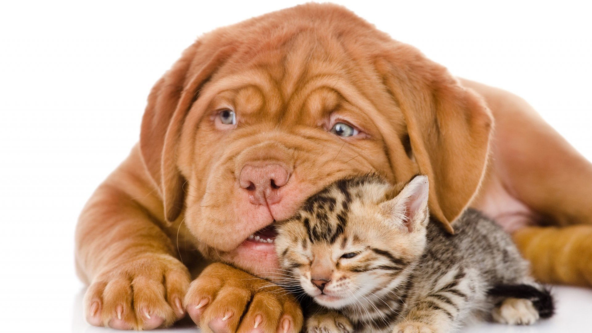 Awesome Cat and Dog free wallpaper ID:125367 for full hd computer