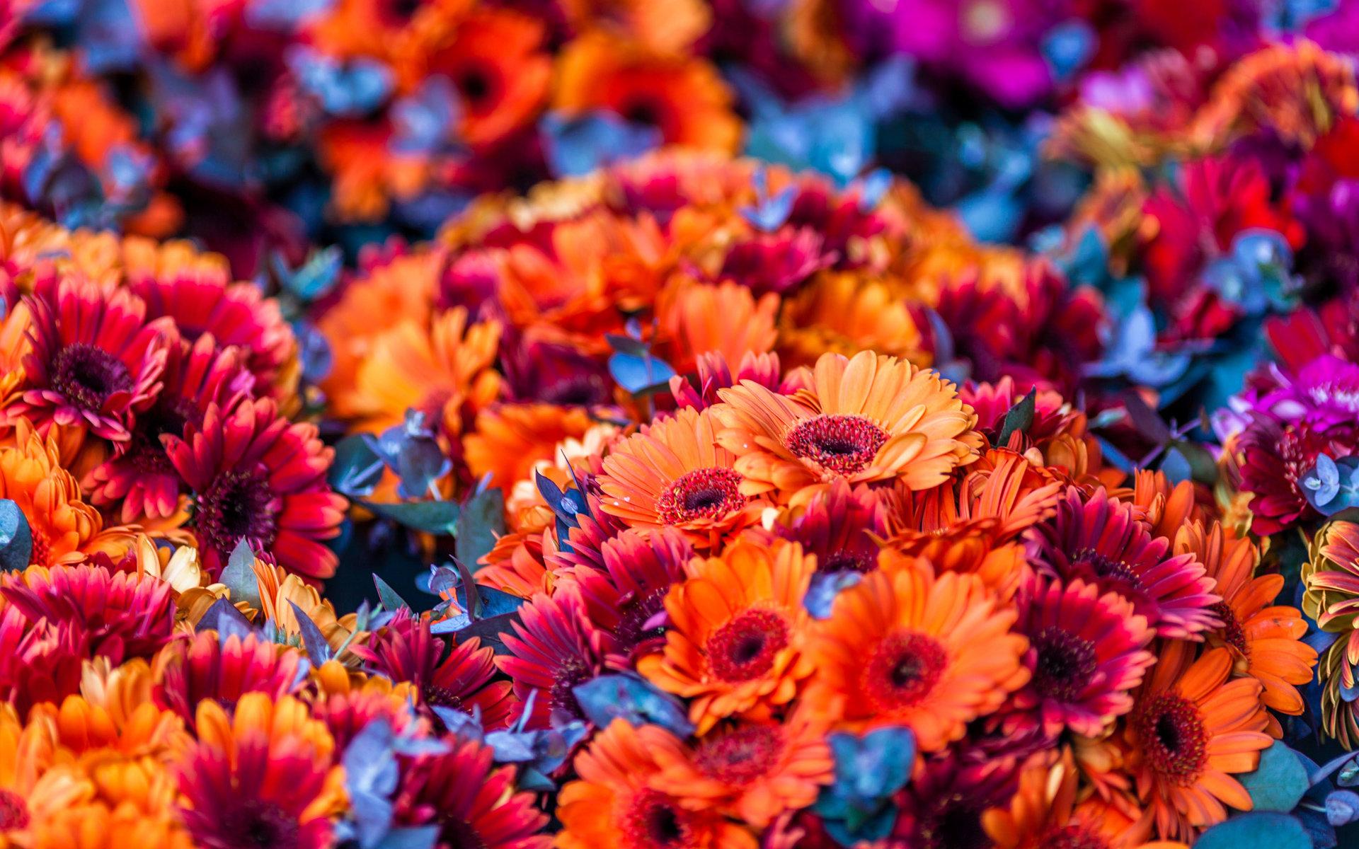 orange flower wallpaper hd 1920x1200 288483
