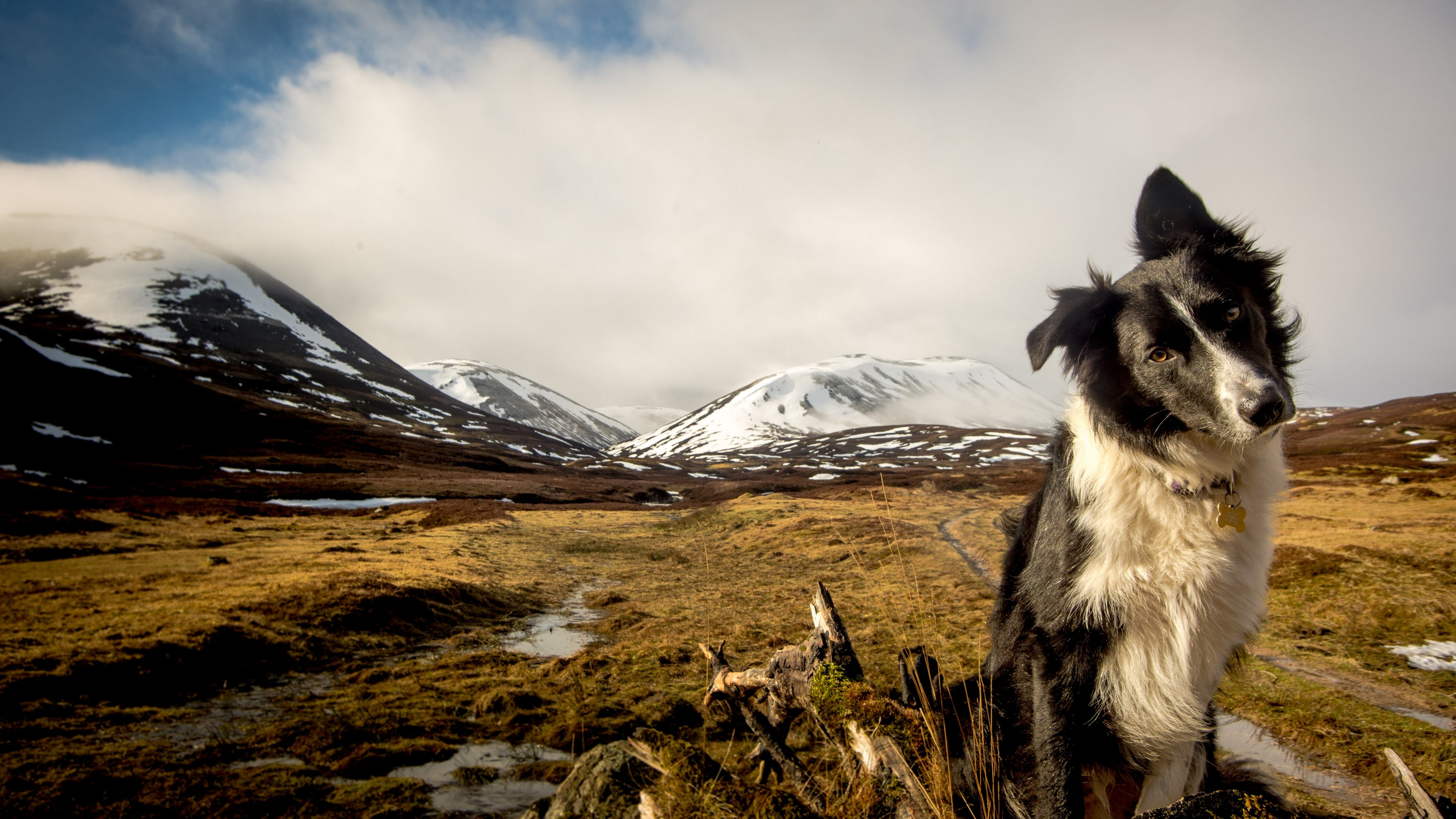 Awesome Border Collie free background ID:165828 for 4k PC