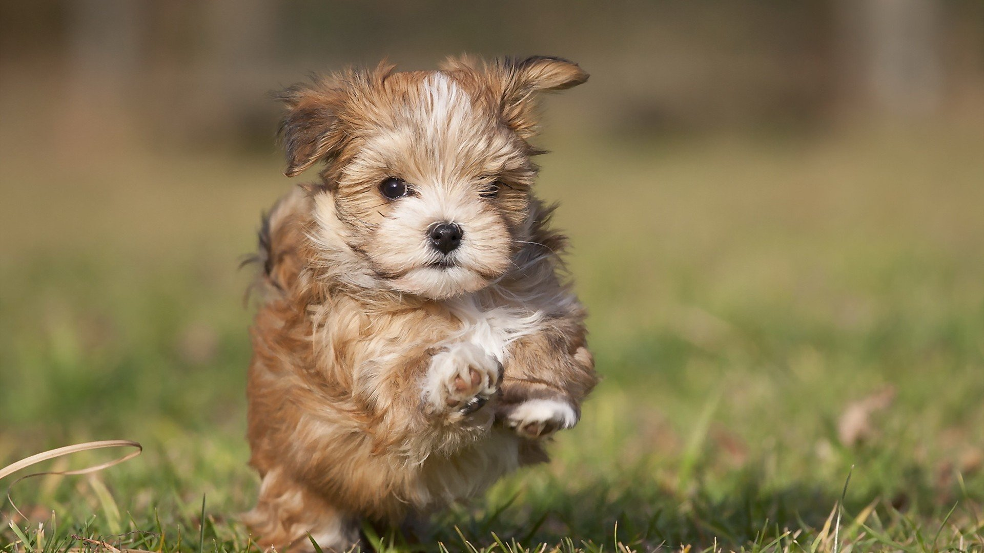 Free download Puppy wallpaper ID:46748 full hd for PC
