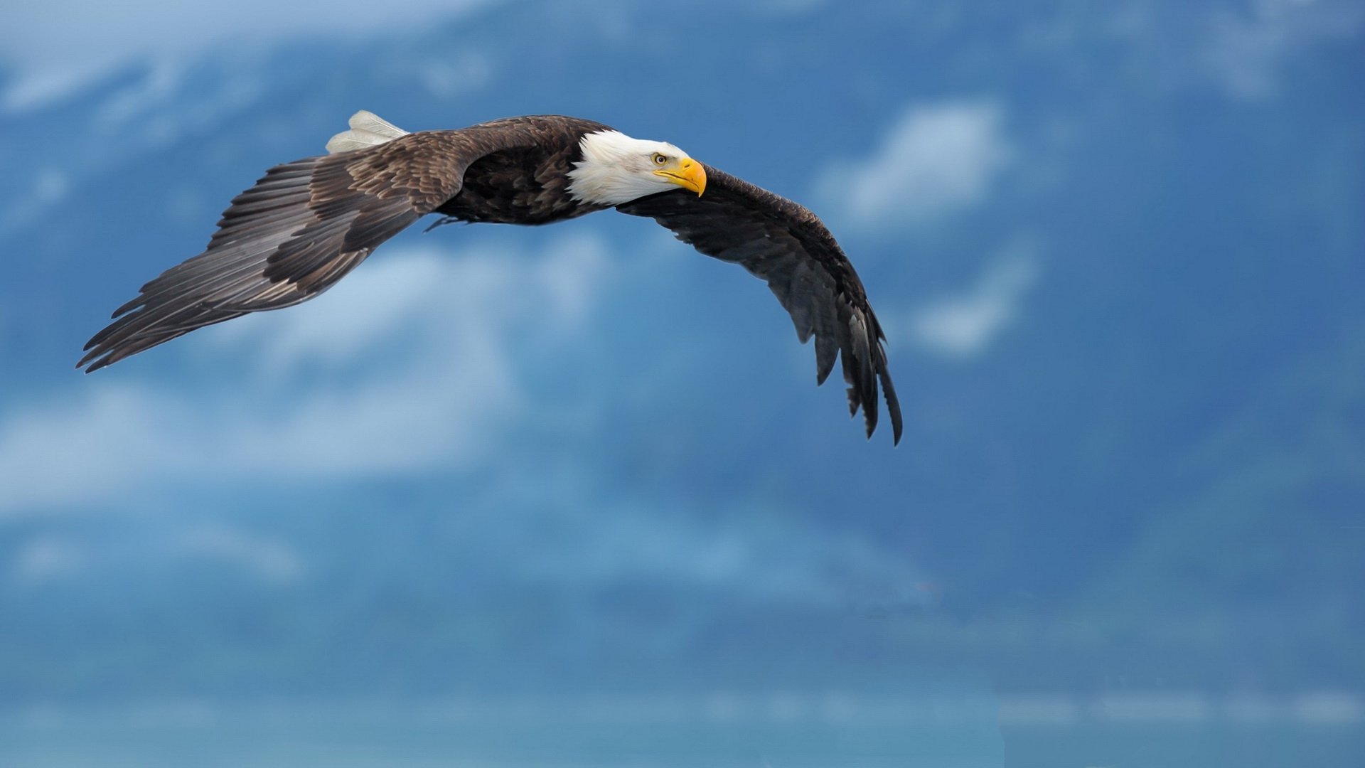 Best American Bald Eagle background ID:68766 for High Resolution 1080p PC
