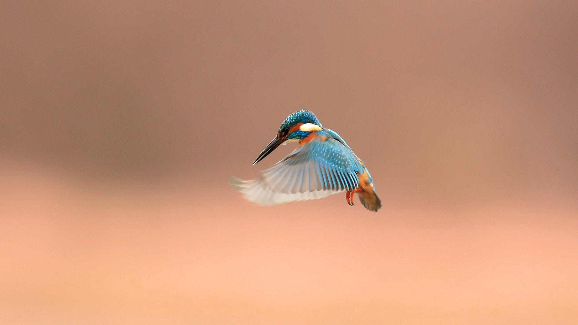 Best Kingfisher wallpaper ID:311340 for High Resolution full hd desktop