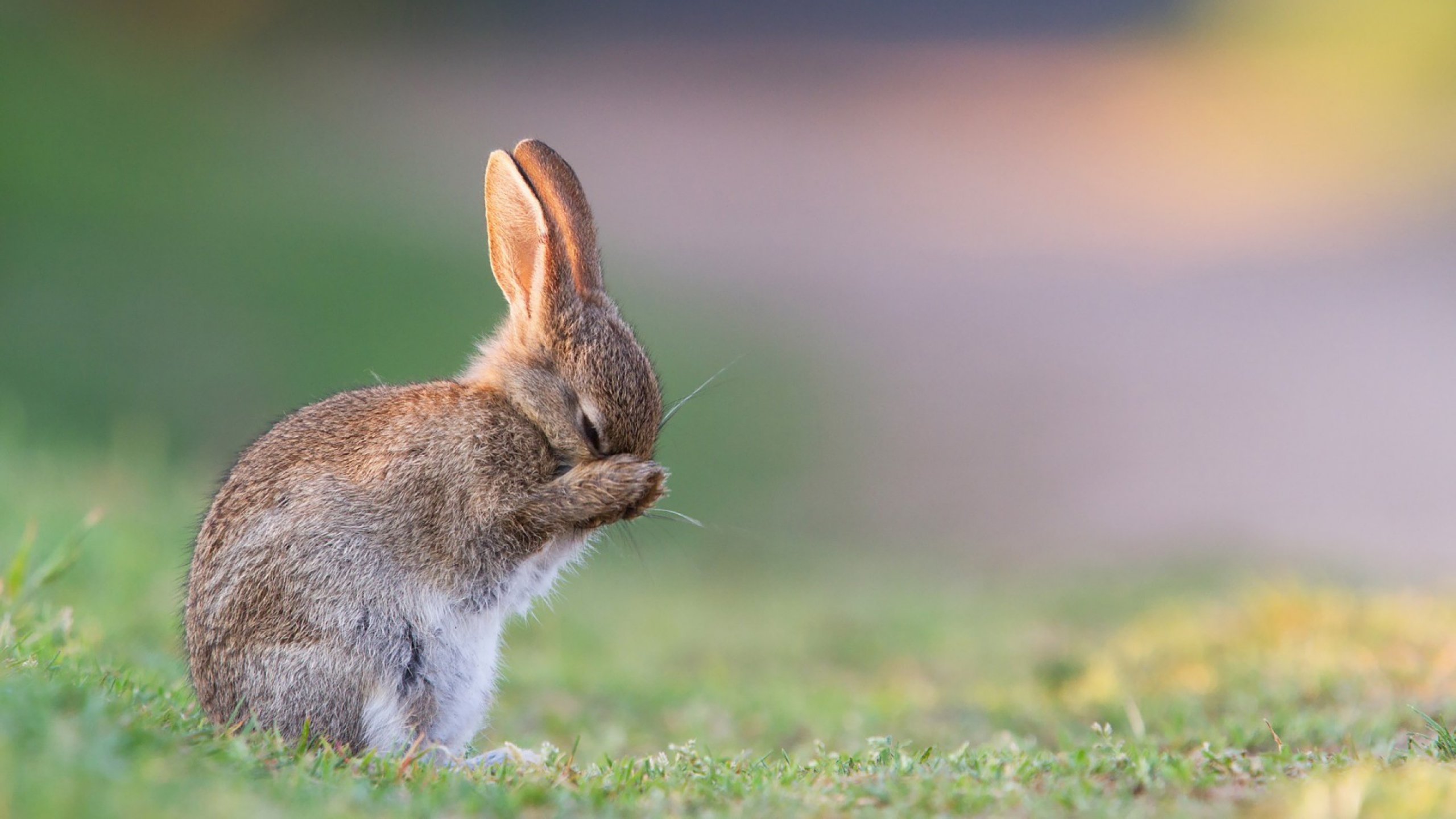 Awesome Rabbit & Bunny free background ID:248986 for hd 2560x1440 PC