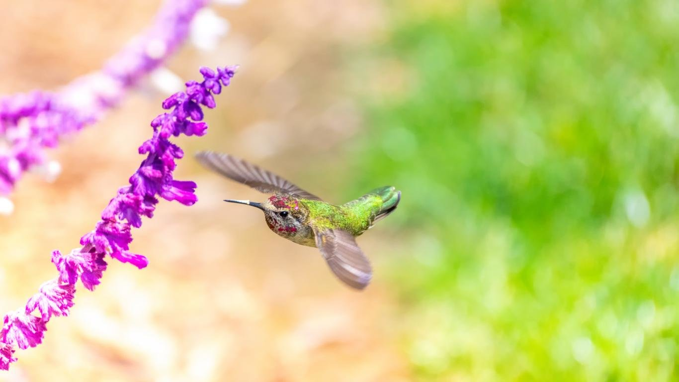 High resolution Hummingbird laptop wallpaper ID:215656 for desktop