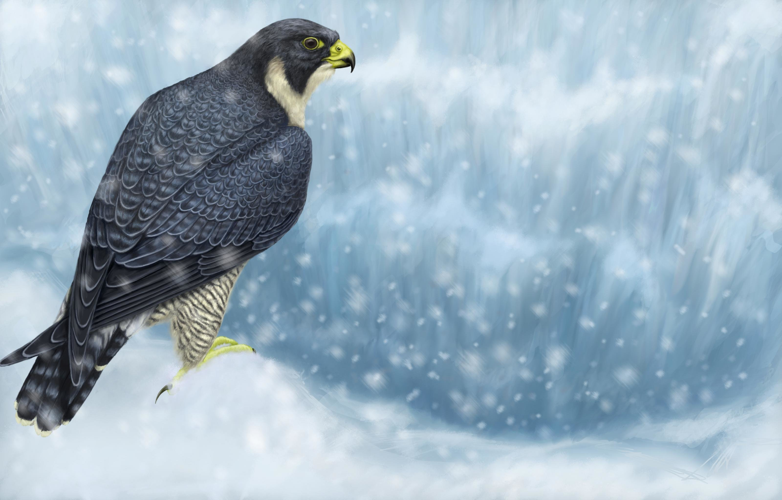 High resolution Peregrine Falcon hd 3200x2048 background ID:244694 for desktop