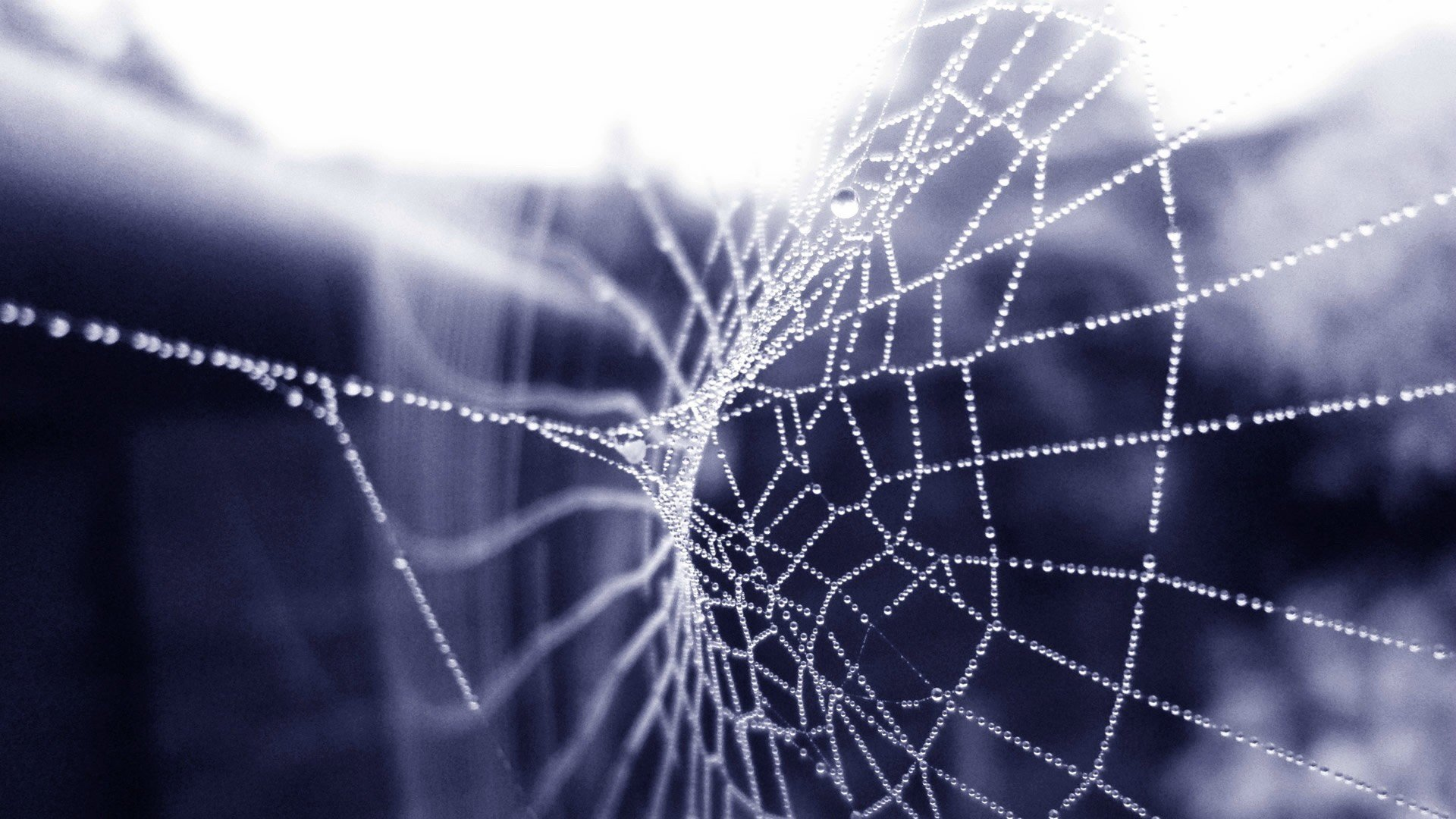 Awesome Spider Web free wallpaper ID:184810 for hd 1920x1080 desktop