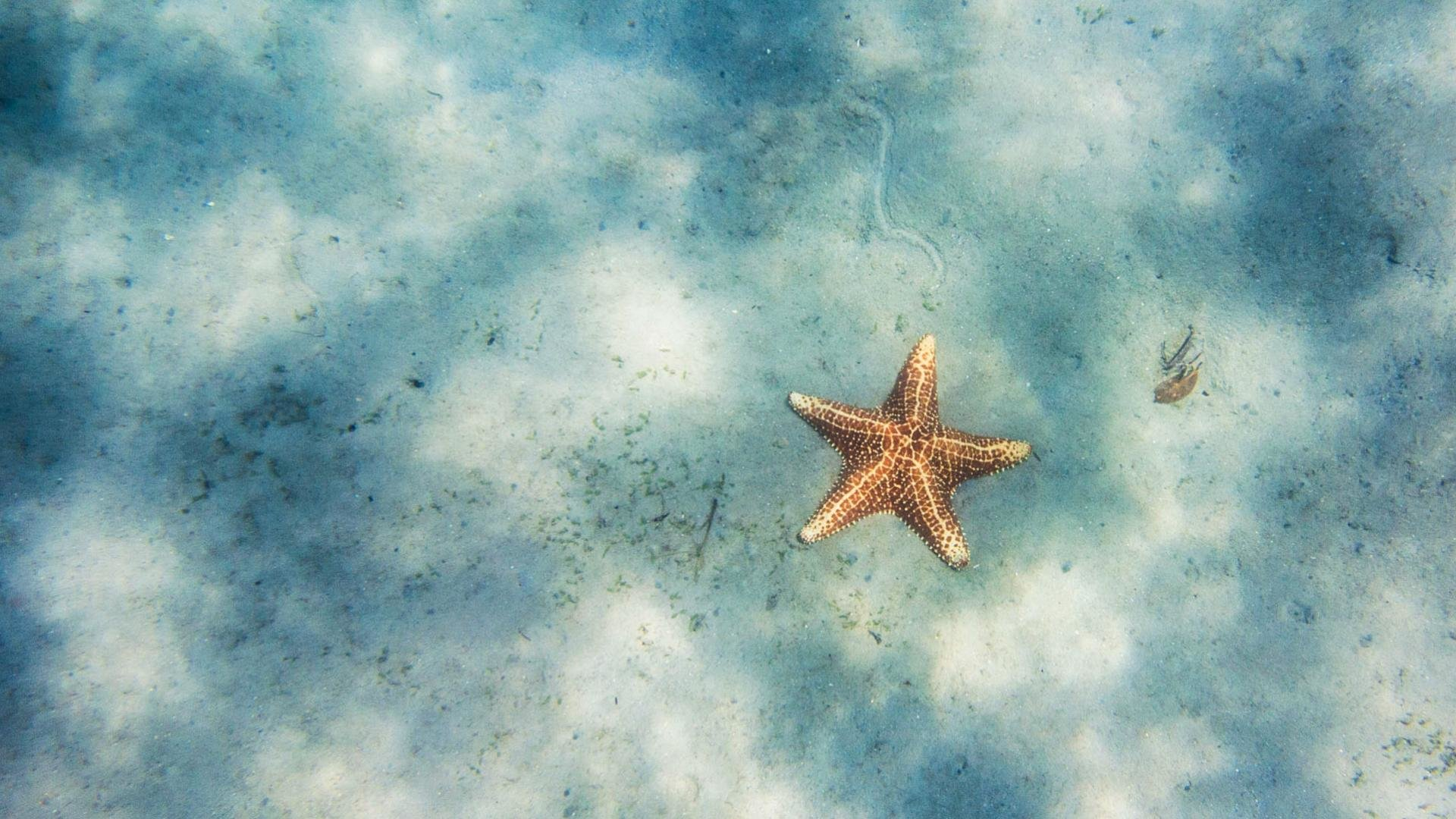 Free download Starfish background ID:29729 hd 1920x1080 for PC