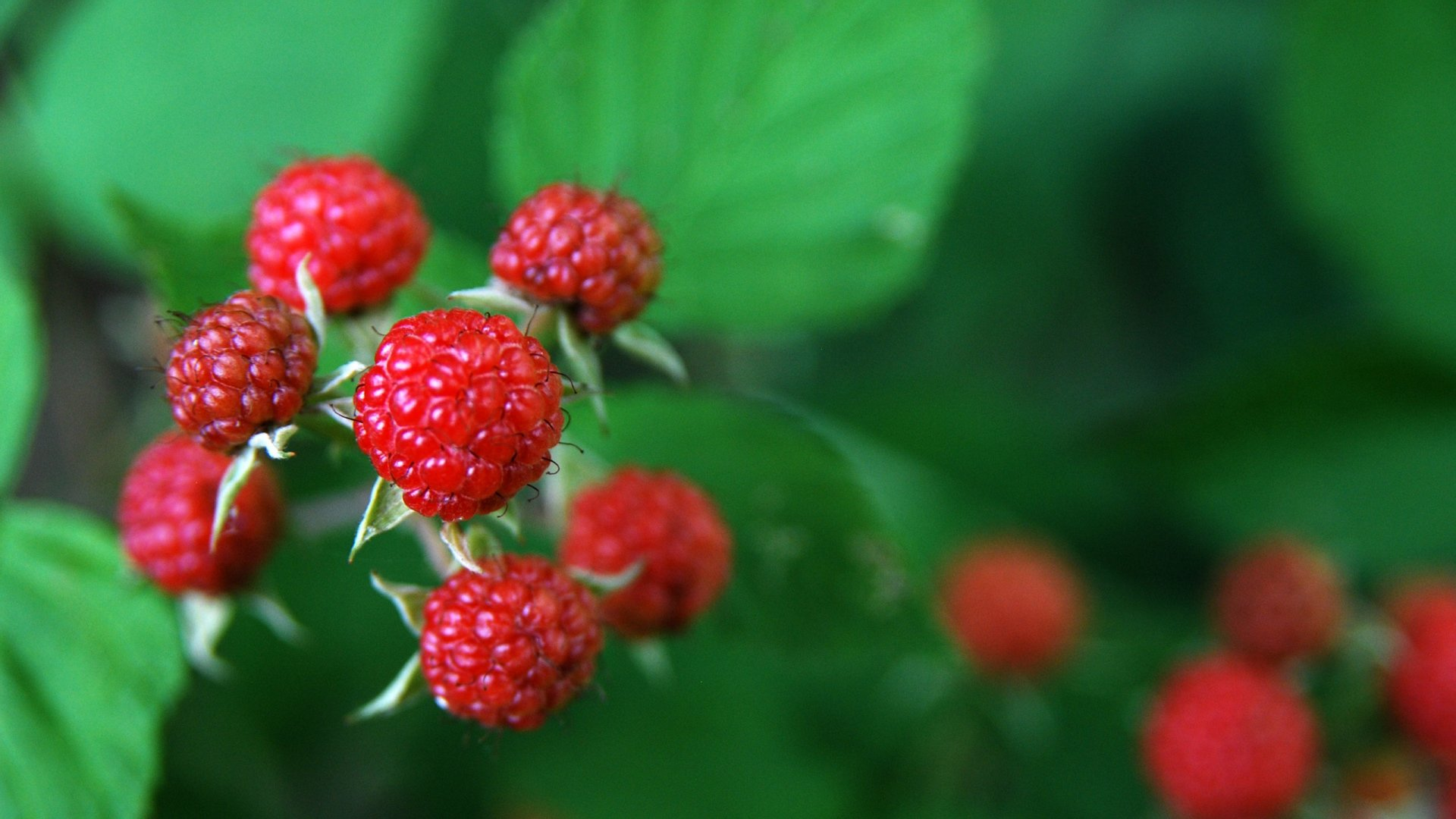 High resolution Raspberry hd 1920x1080 wallpaper ID:50175 for PC