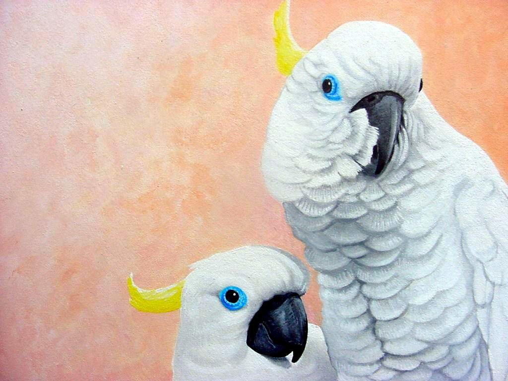 Best Sulphur-crested Cockatoo wallpaper ID:130228 for High Resolution hd 1024x768 computer