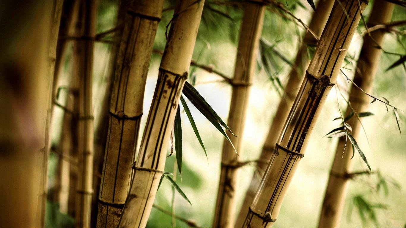 High resolution Bamboo 1366x768 laptop background ID:246775 for PC