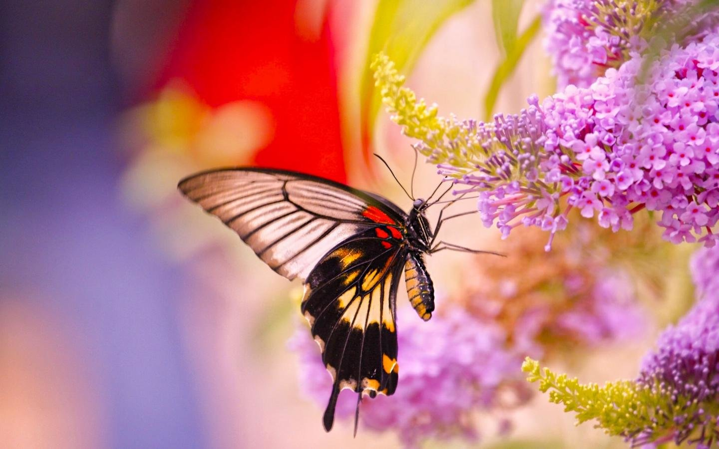 Free Butterfly high quality wallpaper ID:168205 for hd 1440x900 computer
