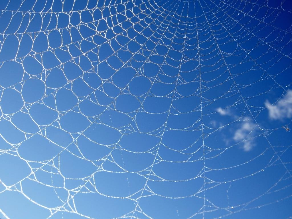 High resolution Spider Web hd 1024x768 wallpaper ID:184808 for PC