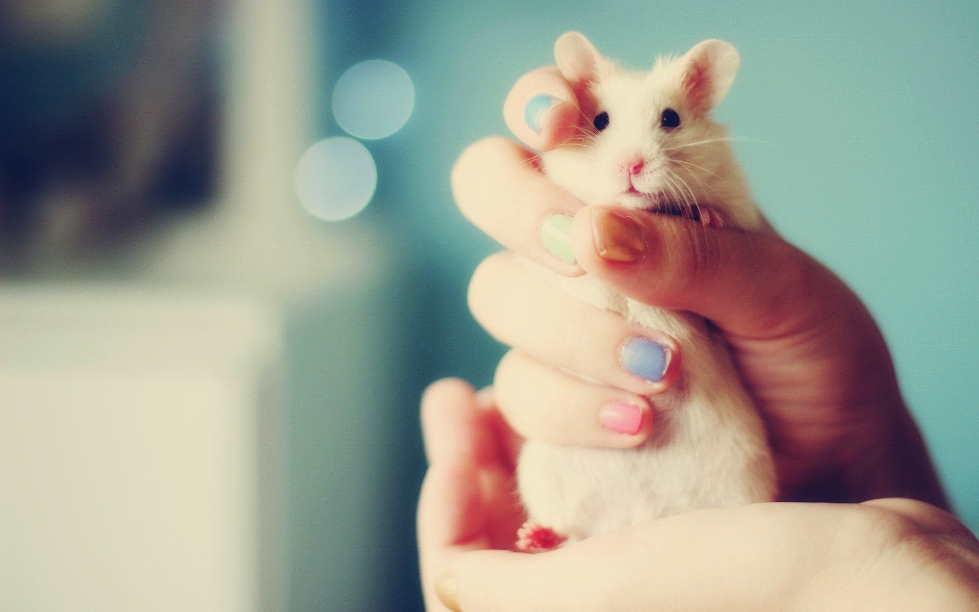 Best Hamster background ID:234062 for High Resolution hd 1920x1200 PC
