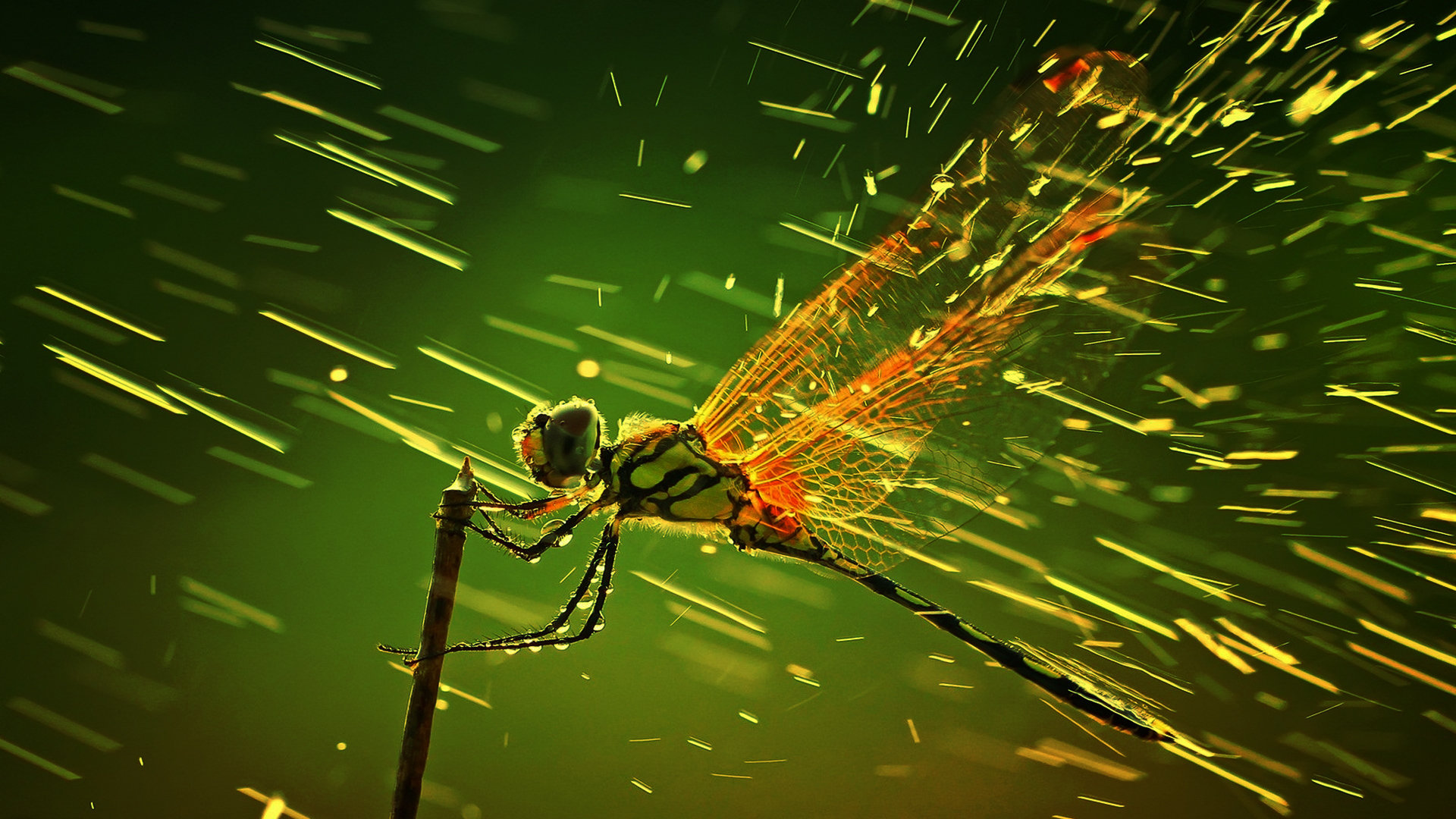 Awesome Dragonfly free wallpaper ID:467593 for 1080p desktop