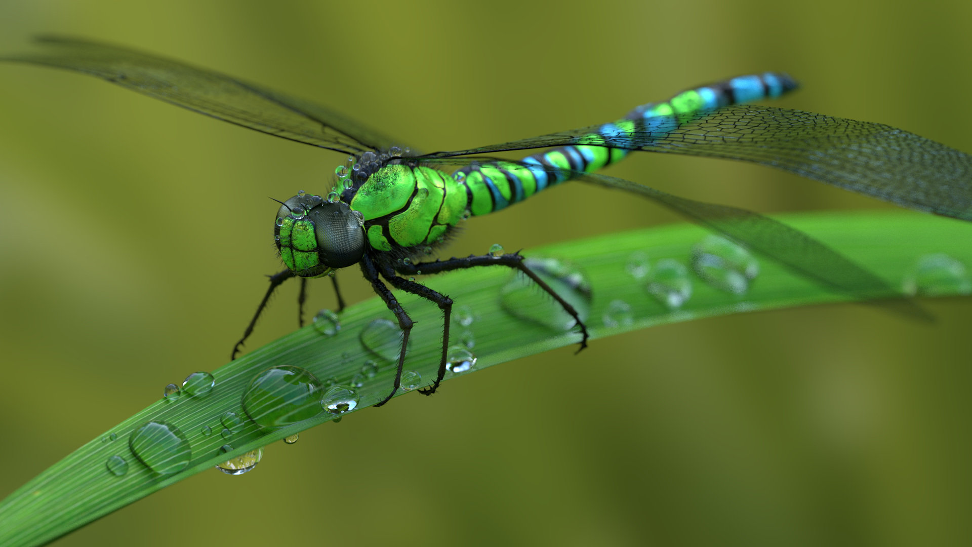 Free download Dragonfly wallpaper ID:467694 full hd 1920x1080 for PC