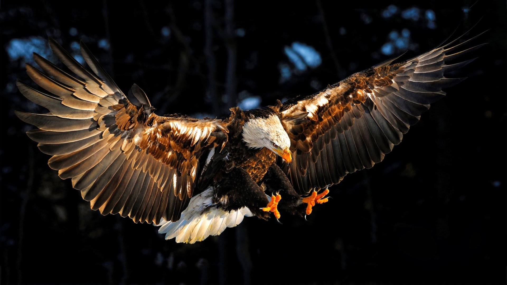 Free Eagle high quality background ID:231136 for full hd 1080p desktop