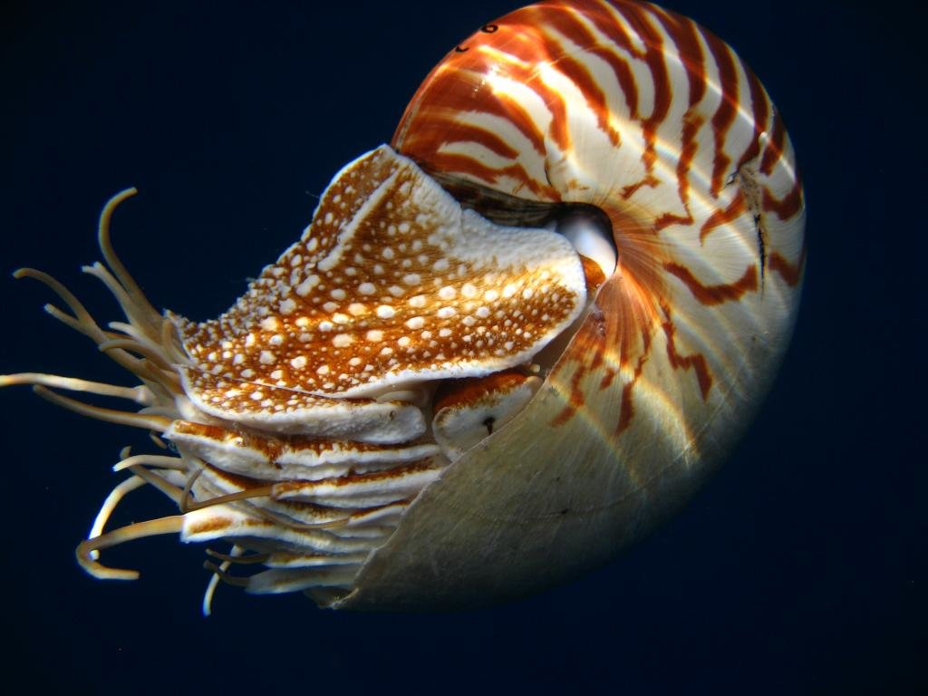 Awesome Sea Life (Marine) free background ID:163884 for hd 1024x768 desktop