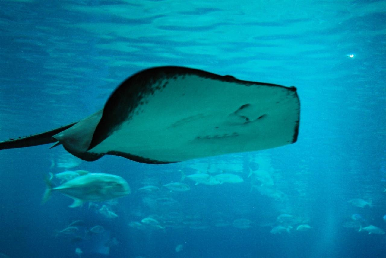High resolution Stingray hd 1280x854 wallpaper ID:339478 for PC