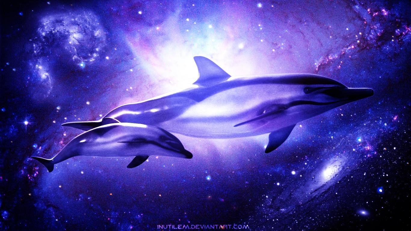 Free Dolphin high quality background ID:248338 for 1366x768 laptop computer