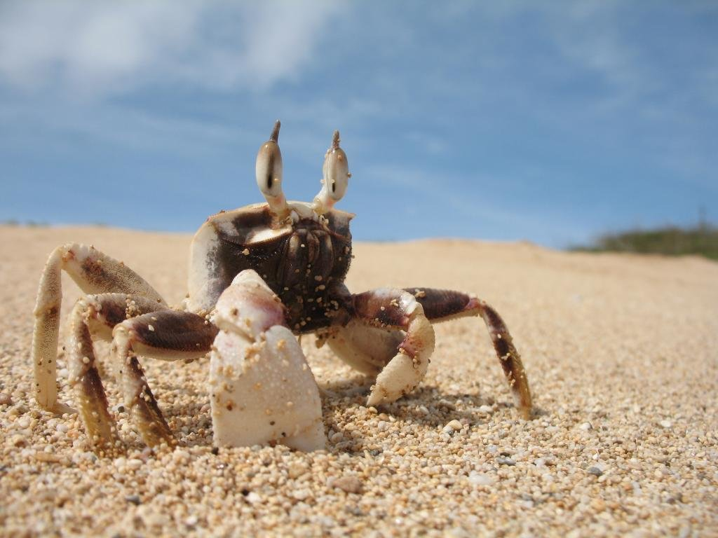 Awesome Crab free wallpaper ID:294319 for hd 1024x768 computer