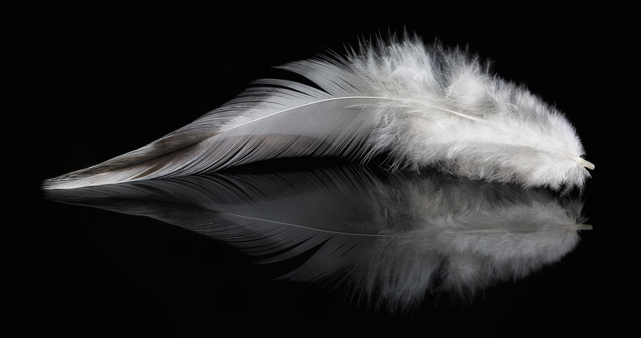 Free Feather High Quality Wallpaper Id460542 For Hd