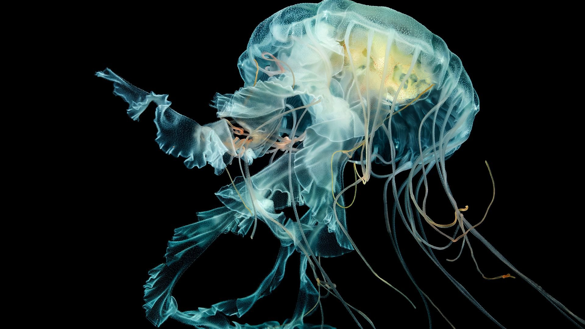 Awesome Jellyfish free wallpaper ID:199802 for 1080p desktop
