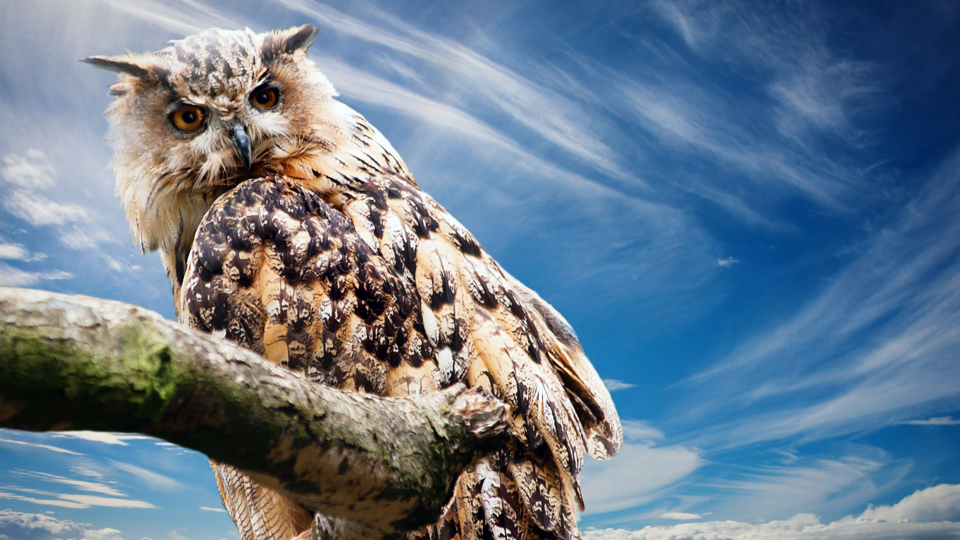Download hd 4k Great Horned Owl computer wallpaper ID:297760 for free