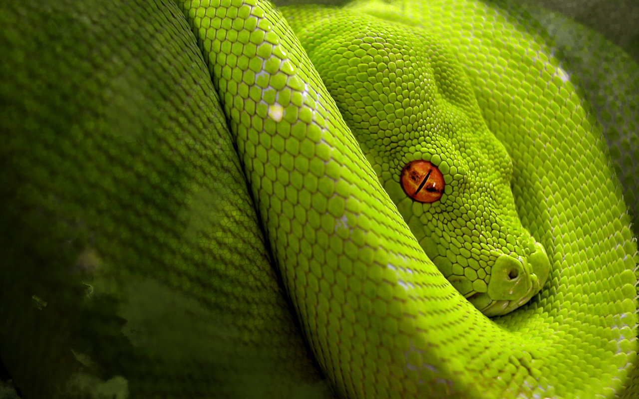 High resolution Snake hd 1280x800 wallpaper ID:137169 for PC