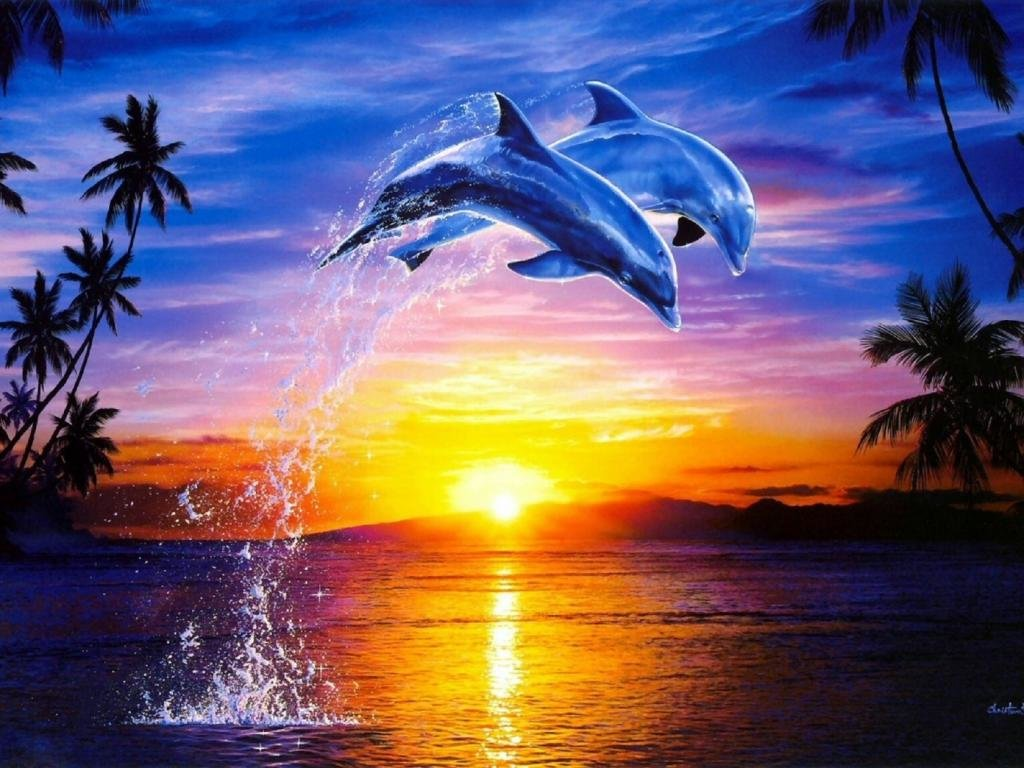 Best Dolphin background ID:248304 for High Resolution hd 1024x768 PC