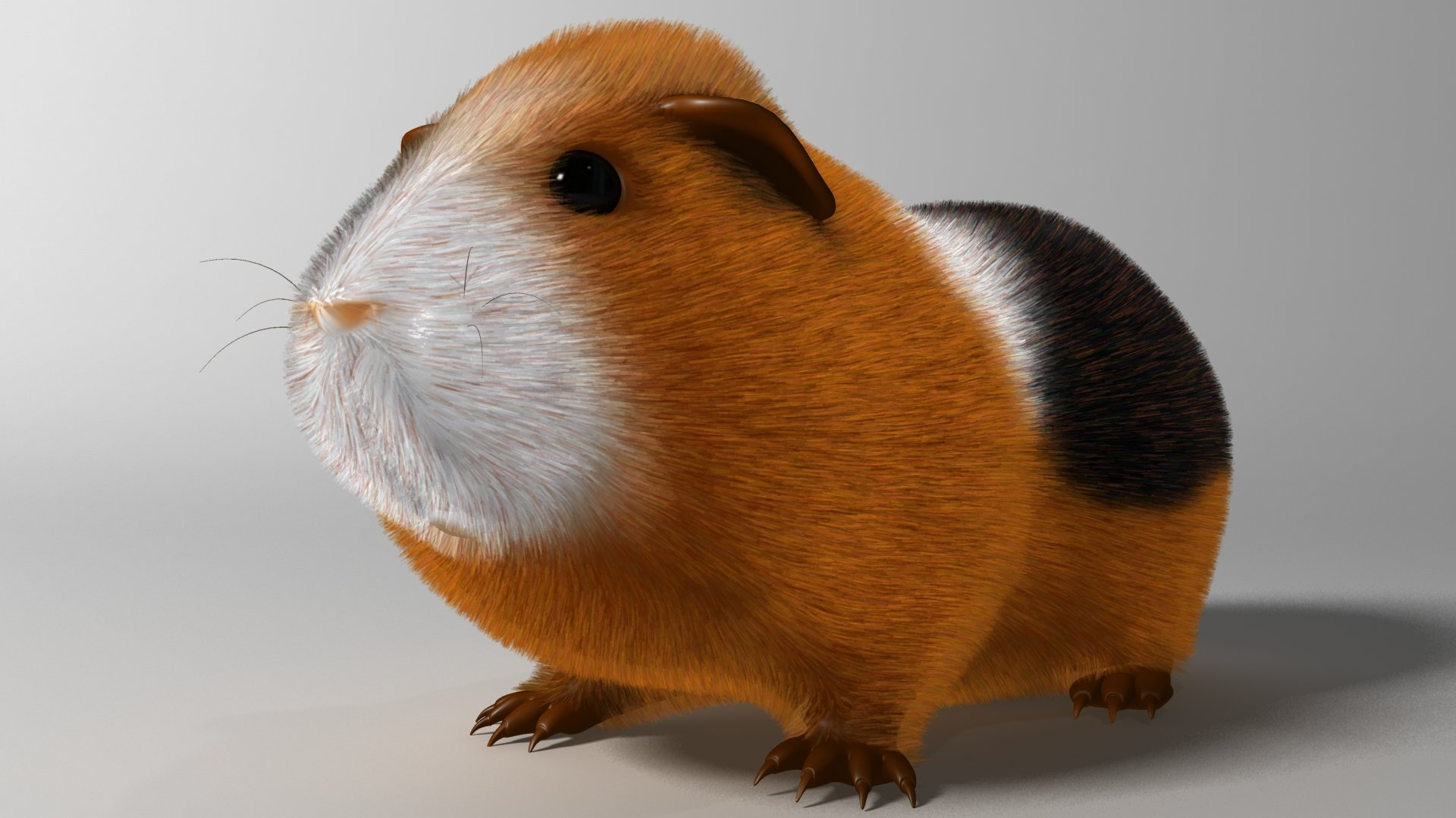 Free download Guinea Pig wallpaper ID:270957 hd 1920x1080 for computer