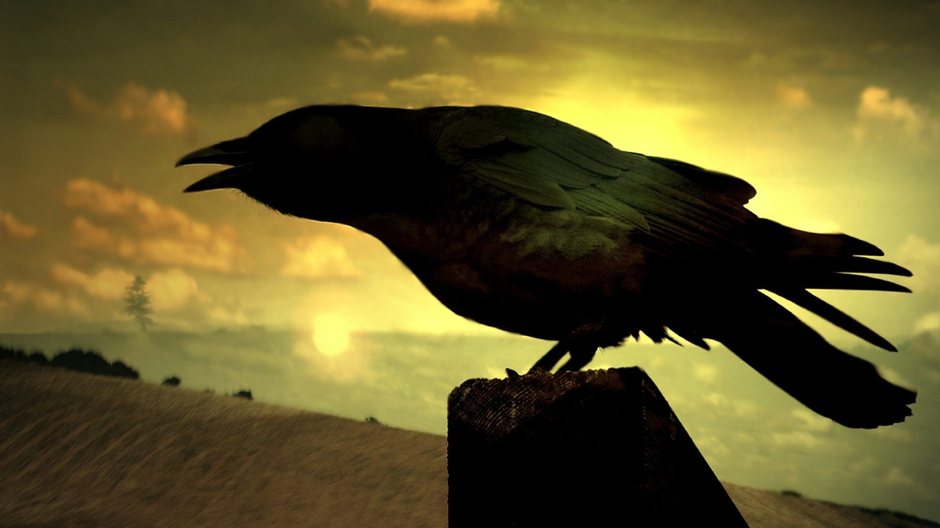 Best Raven background ID:397358 for High Resolution full hd 1080p desktop