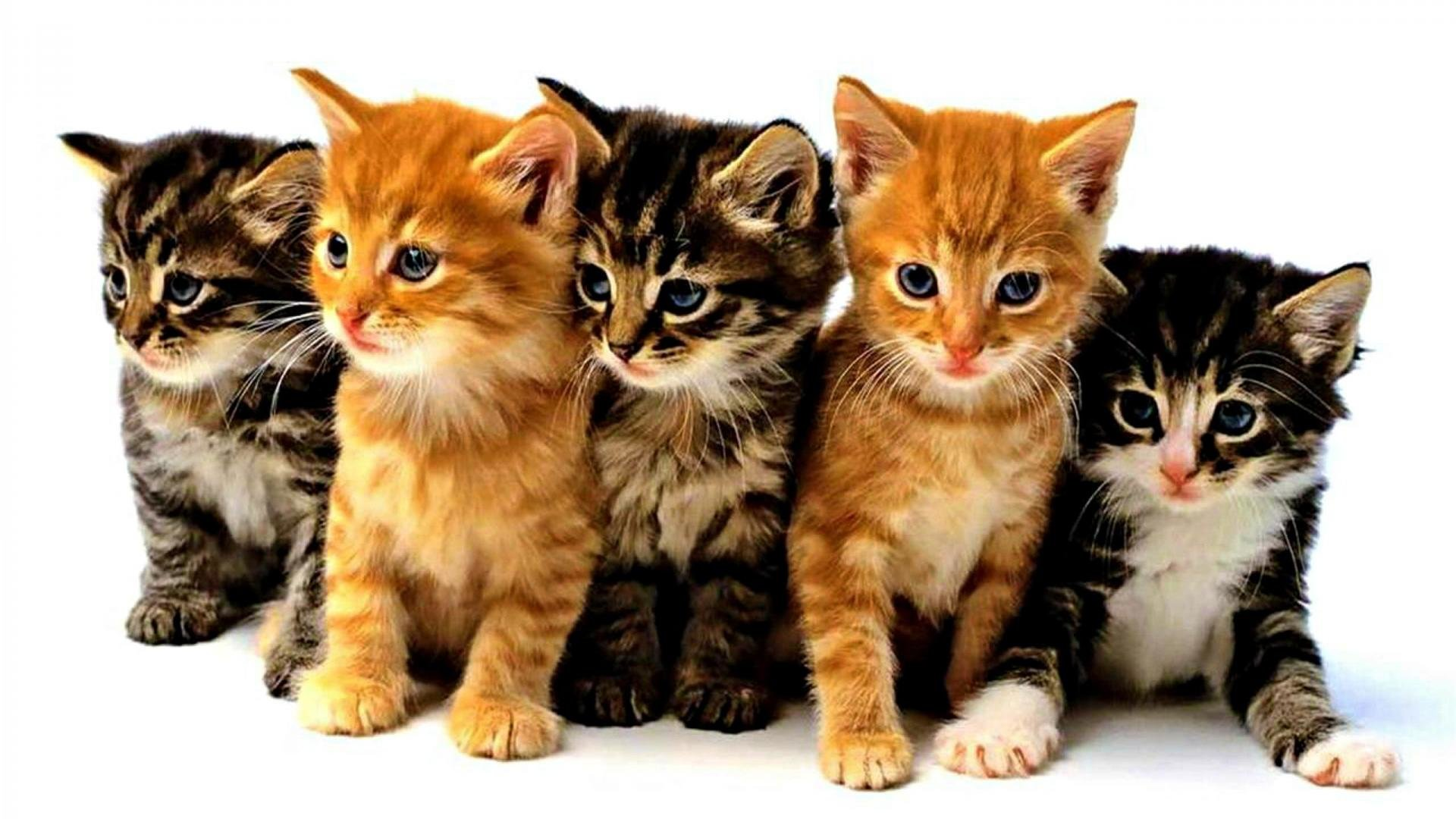 Download 1080p Kitten desktop background ID:429101 for free