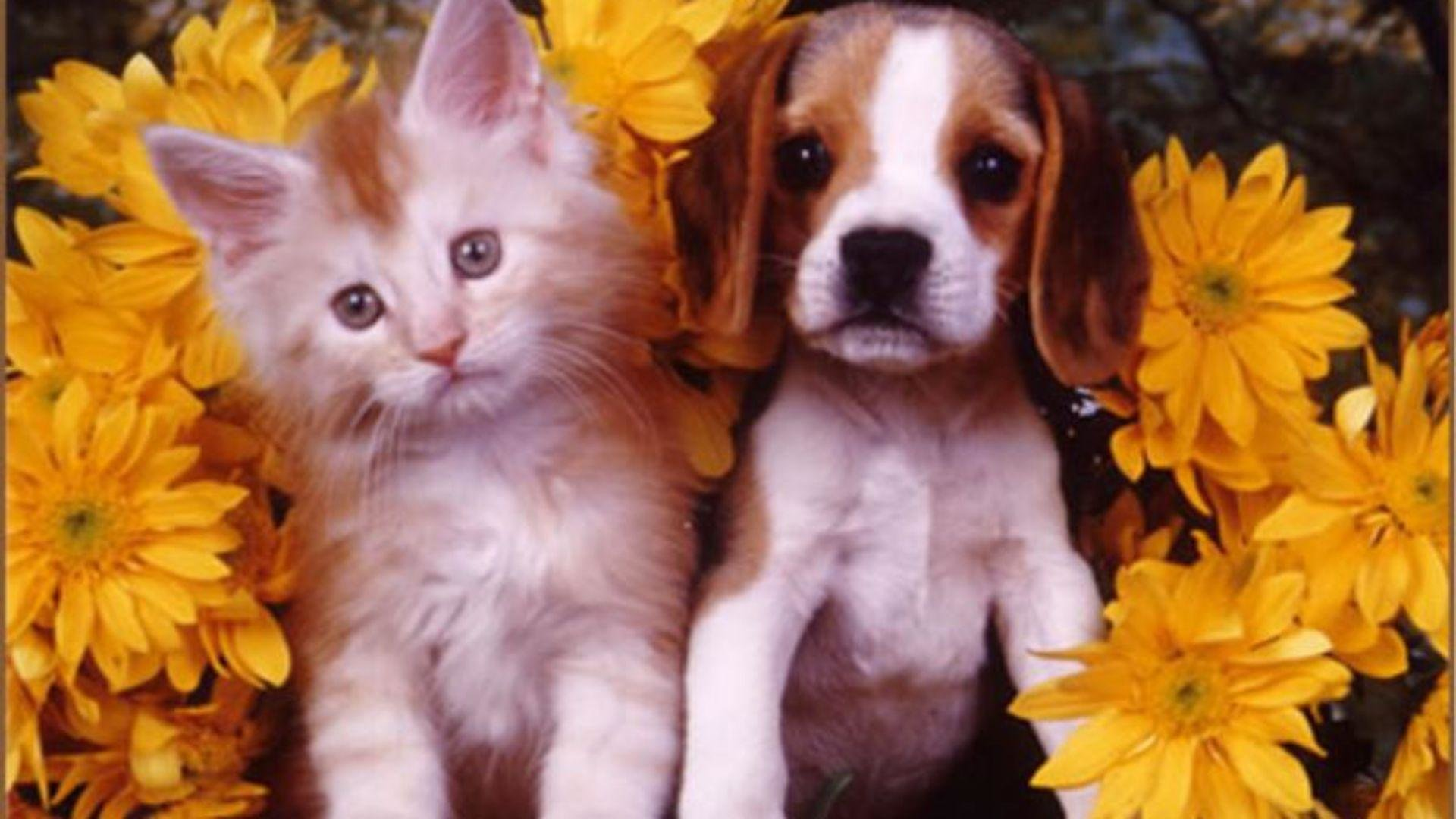 High resolution Cat and Dog hd 1080p wallpaper ID:125346 for desktop