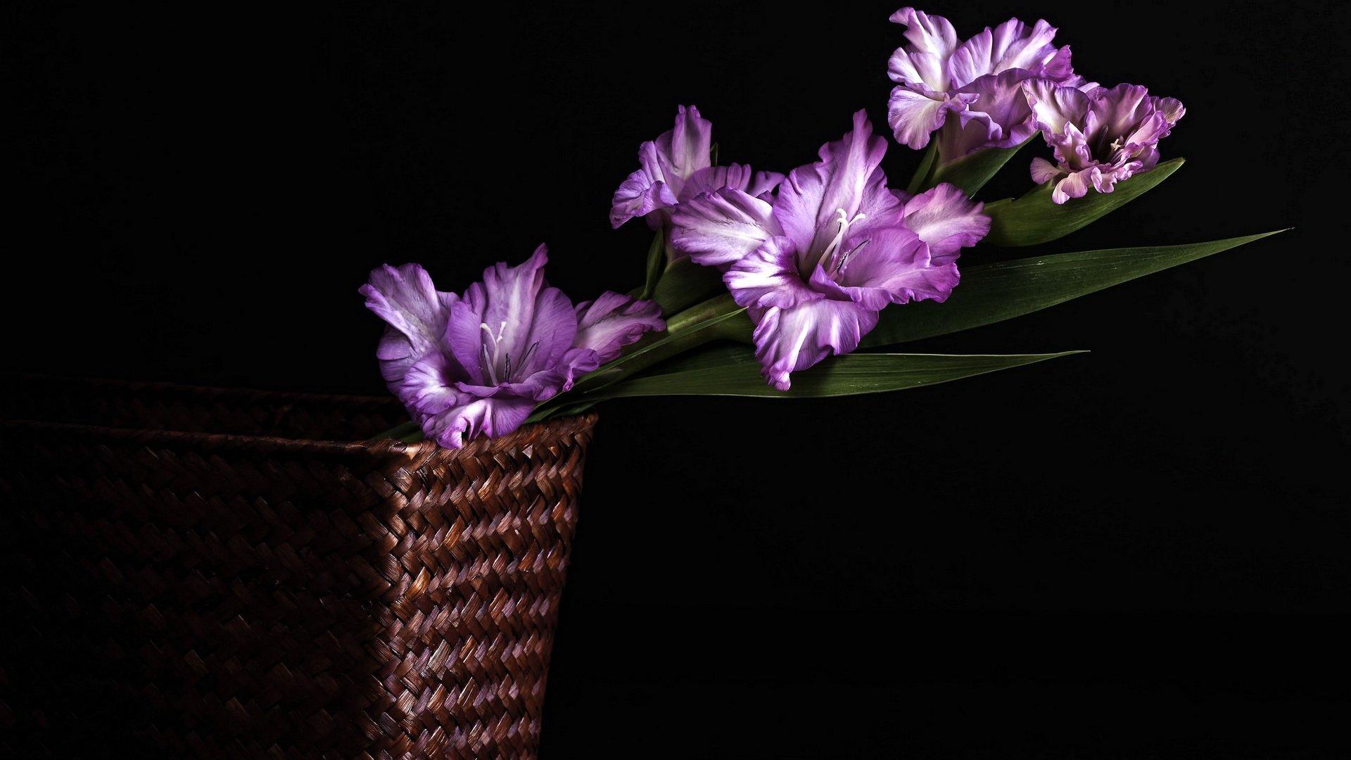 Download Full Hd Purple Flower Desktop Wallpaper Id 286208 For Free