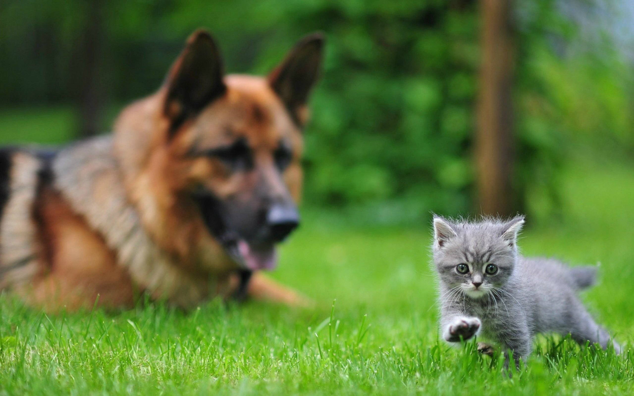 Awesome Cat and Dog free background ID:125325 for hd 2560x1600 computer