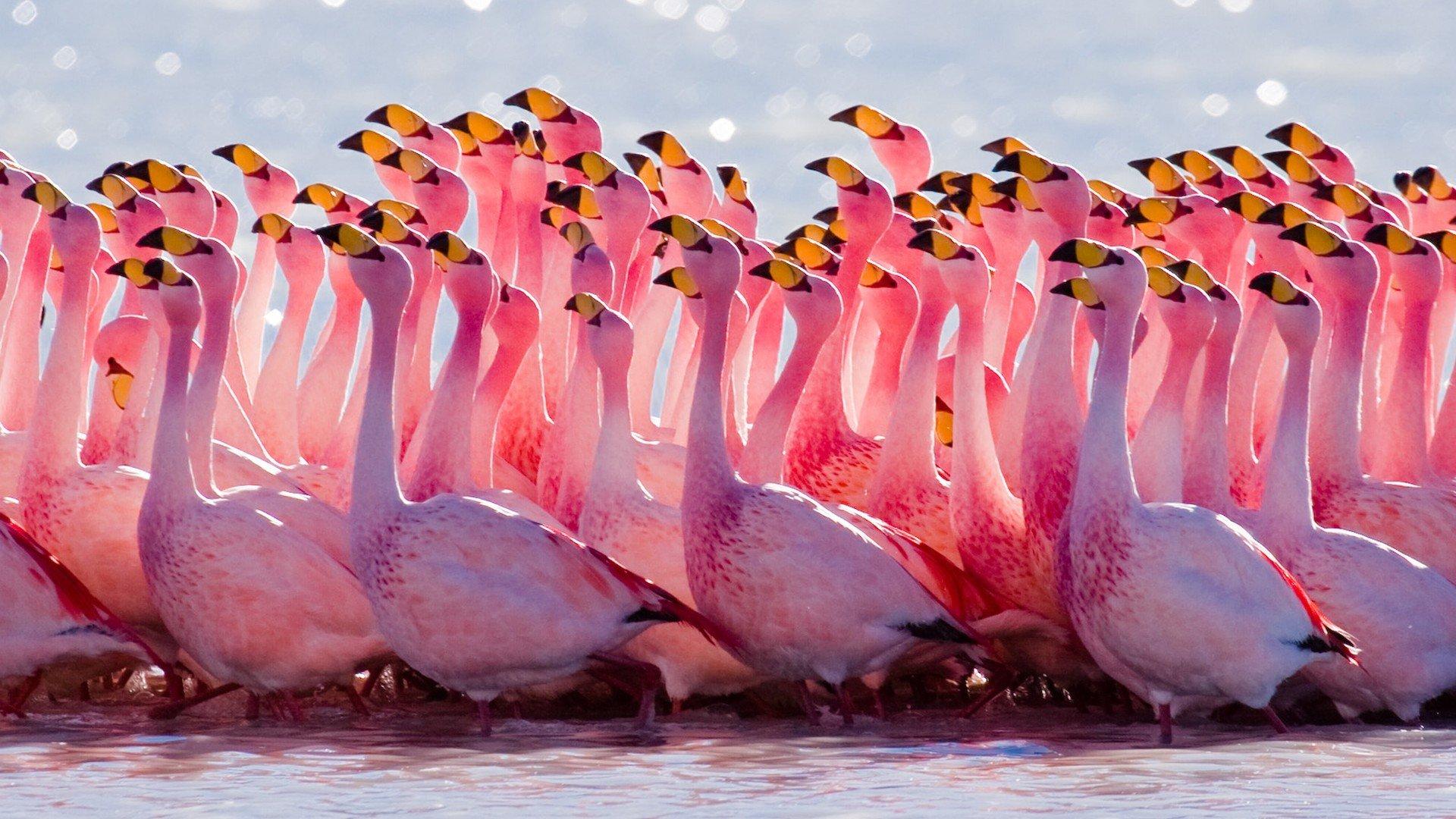 Flamingo Wallpapers 1920x1080 Full Hd 1080p Desktop Backgrounds