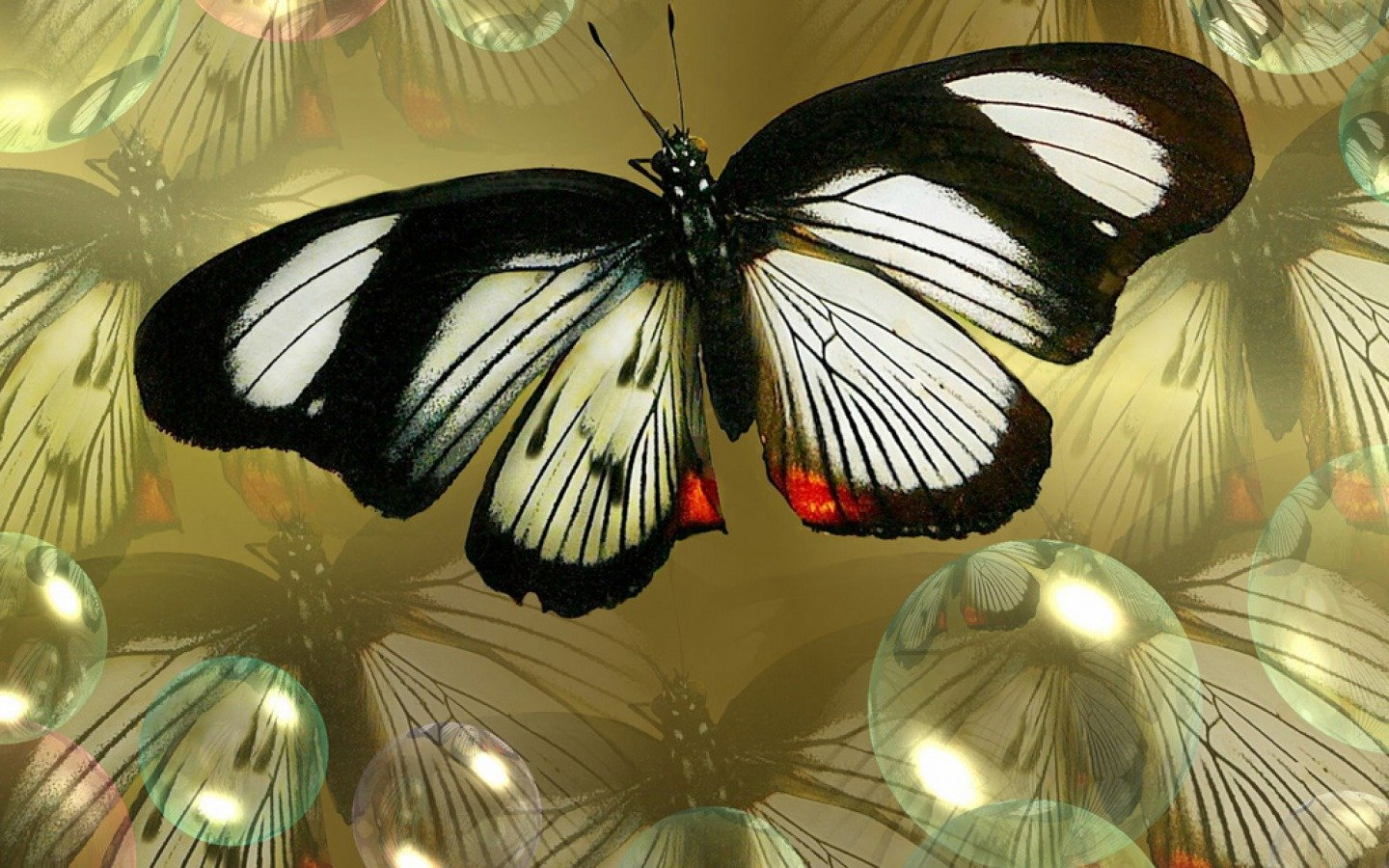 Download hd 1440x900 Butterfly PC background ID:168868 for free