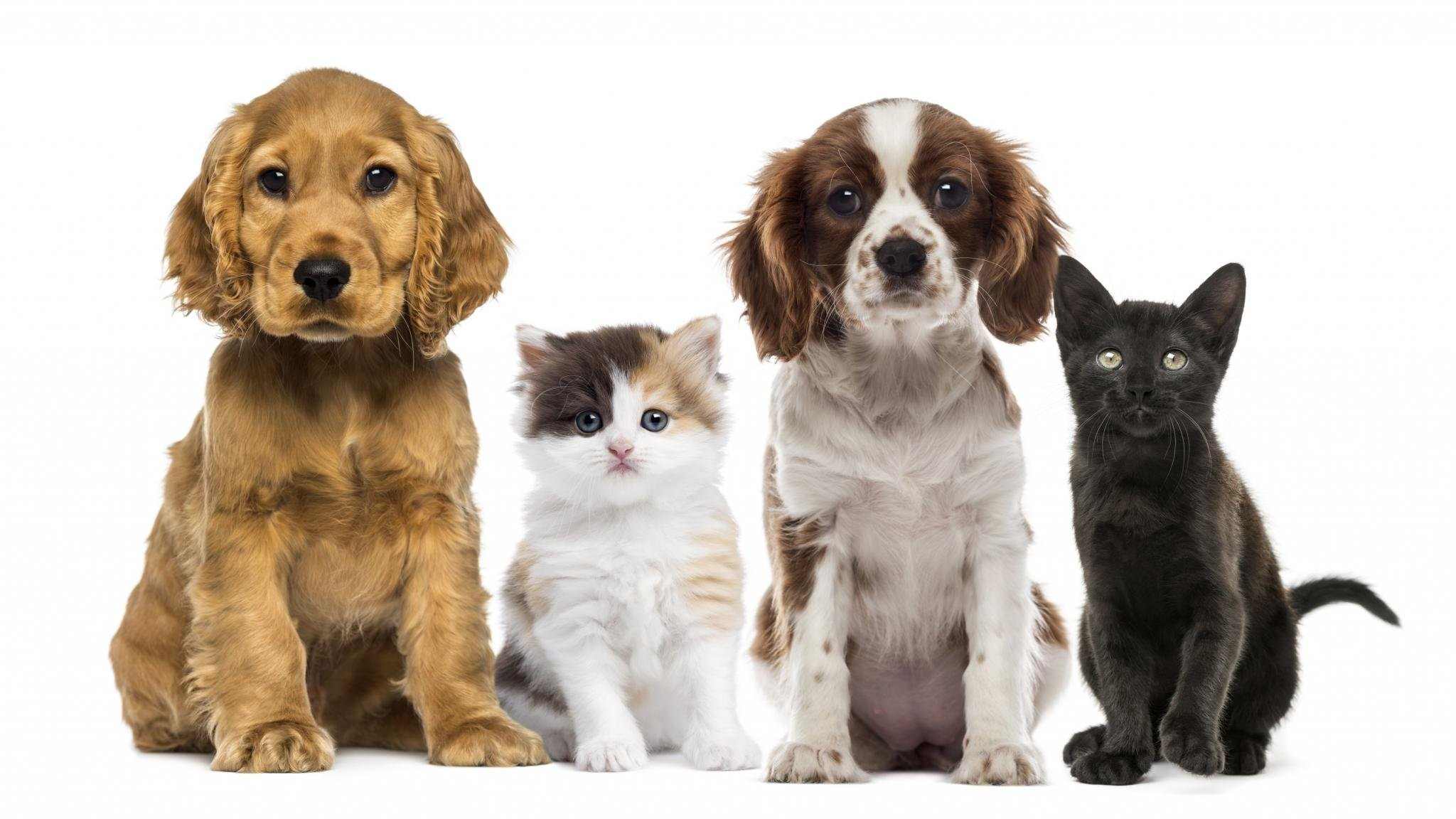Free Download Cat And Dog Background Id 125345 Hd 2048x1152 For Computer